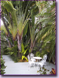 Palms in the Garden